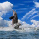 知的な友人,恋人を表す幸運のシンボル「イルカ」の夢占い11診断