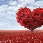 情熱やパワー,怒りや嫉妬を表す「赤い色」が印象的な夢占い5診断