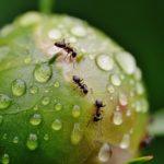 「努力」「勤勉」「チームワーク」を意味する蟻に関する夢占い15診断