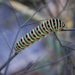 未来の小さな問題・トラブルを意味する「芋虫」の夢占い6診断