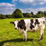 財産,神聖,自分の側面などを意味する「牛」の夢占い16診断