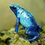 成長,前進を意味する蛙(カエル)の夢占い18診断