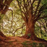 生命力,成長,自分の体などを意味する「木」の夢占い13診断
