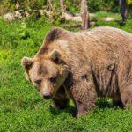 母親や安産を意味する「熊」の夢占い14診断