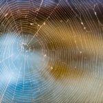 ワナ,裏切り,絶望と希望を意味する「蜘蛛」の夢占い14診断