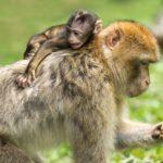 猿の夢占いの意味とは?悪だくみ、ずる賢さなど17診断
